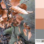 kleurinspiratie voorbeeld van een inspirerend kleurepalet voor kleurtoepassing in je interieur