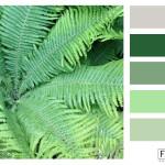 groene varen, kleurinspiratie, kleurpallet